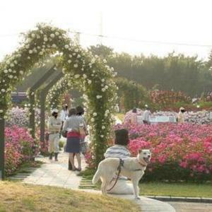 大阪でサプライズプロポーズ 浜寺公園