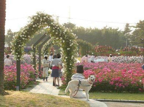 大阪のサプライズプロポーズ 浜寺公園