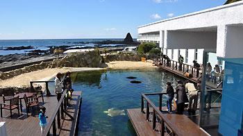 大阪のサプライズプロポーズ 串本海中公園