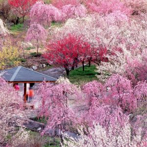 大阪でサプライズプロポーズ いなべ市 農業公園