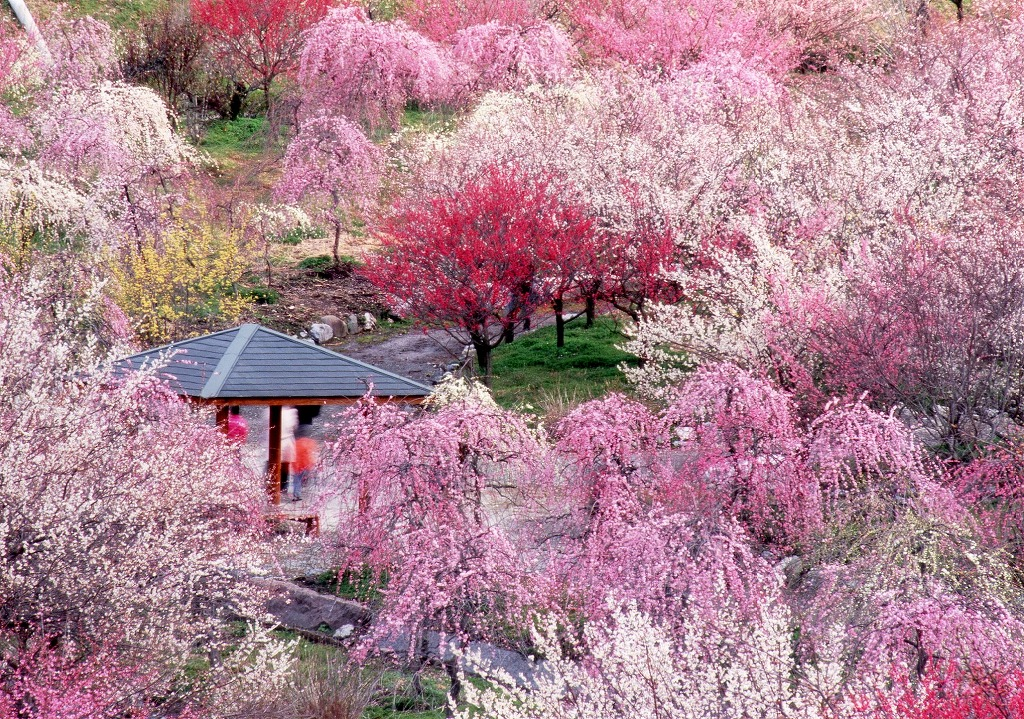 大阪のサプライズプロポーズ いなべ市 農業公園