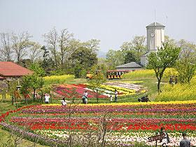大阪でサプライズプロポーズ 京都府農業公園