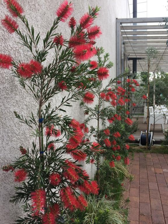 ブラシの木3