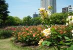 大阪でサプライズプロポーズ 靭公園
