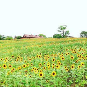 大阪gardenのサプライズプロポーズ ハーベストの丘