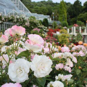 大阪でサプライズプロポーズ 大阪府立花の文化園