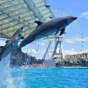 大阪でサプライズプロポーズ 名古屋港水族館