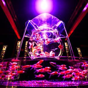 大阪でサプライズプロポーズ アートアクアリウム
