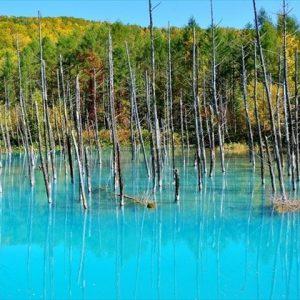 大阪でサプライズプロポーズ 美瑛の青い池