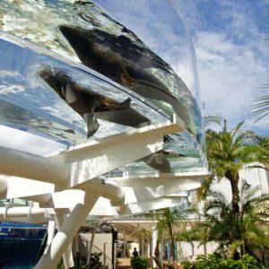 大阪でサプライズプロポーズ サンシャイン水族館