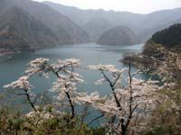 大阪のサプライズプロポーズ 奥多摩湖