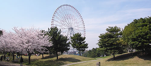 大阪のサプライズプロポーズ 葛西臨海・海浜公園