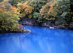 大阪でサプライズプロポーズ 四万湖 (しまこ)