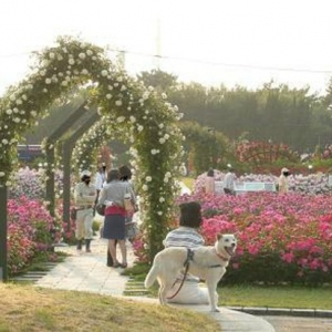 大阪gardenのサプライズプロポーズ 浜寺公園