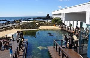 大阪gardenのサプライズプロポーズ 串本海中公園