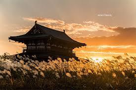 大阪gardenのサプライズプロポーズ 雄大な歴史の中で愛を告げる…  奈良 朱雀門