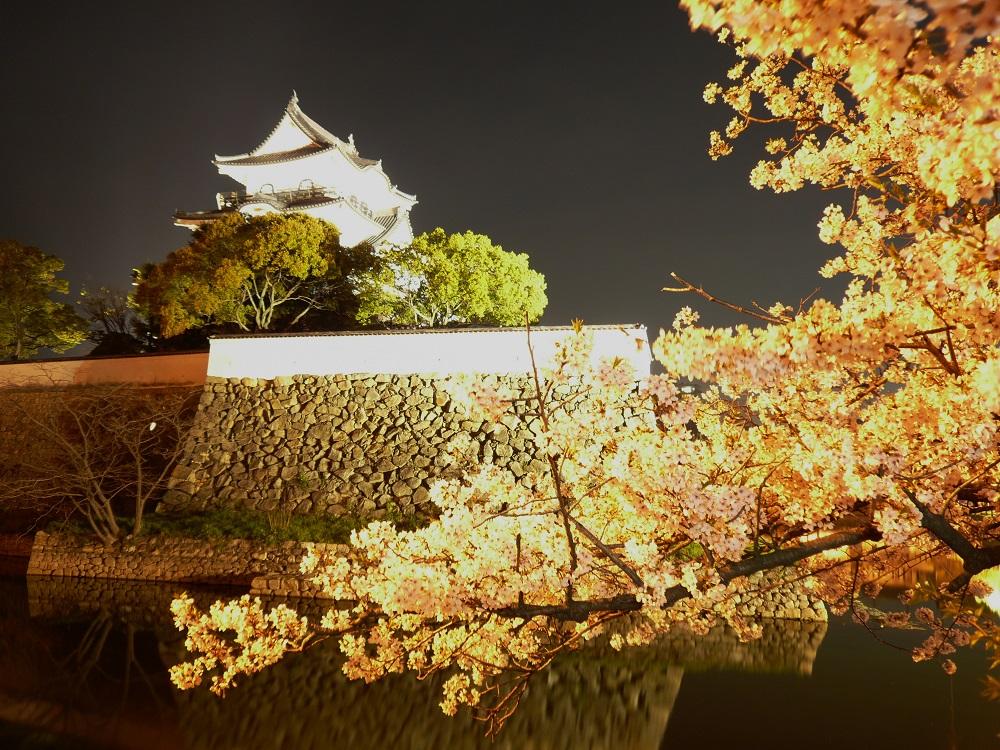 岸和田城桜