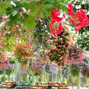 大阪gardenのサプライズプロポーズ 神戸どうぶつ王国