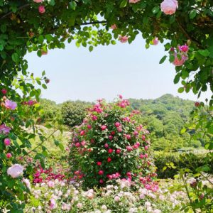 大阪gardenのサプライズプロポーズ イングリッシュガーデン