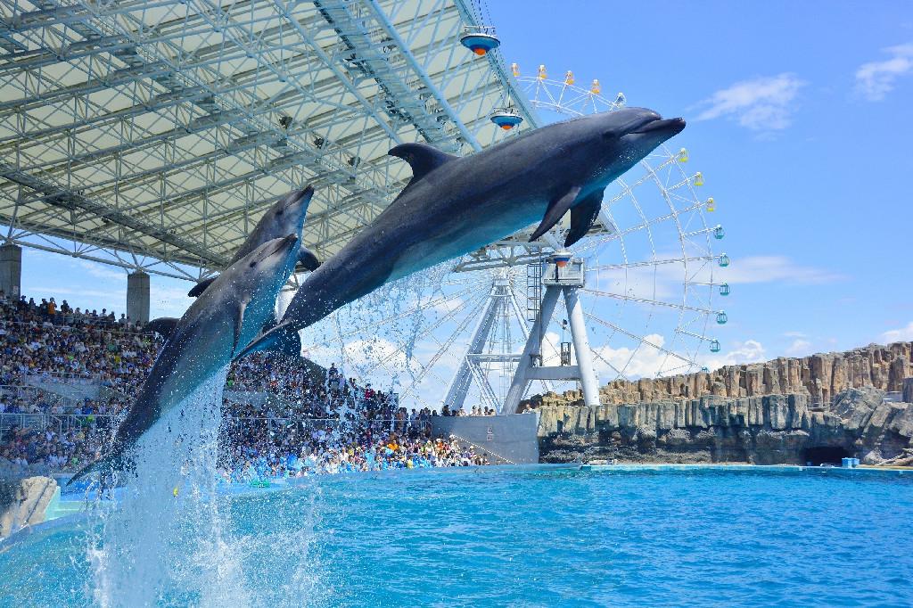 大阪のサプライズプロポーズ 名古屋港水族館