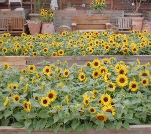 大阪gardenのサプライズプロポーズ 神戸市立フルーツフラワーパーク
