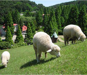 大阪gardenのサプライズプロポーズ 六甲山牧場