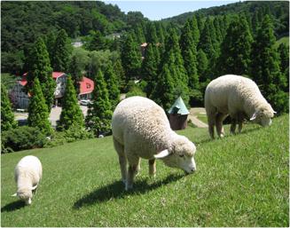 大阪のサプライズプロポーズ 六甲山牧場