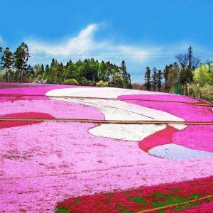 大阪gardenのサプライズプロポーズ 羊山公園