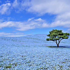 大阪gardenのサプライズプロポーズ 国営ひたち海浜公園
