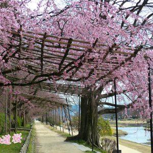 大阪gardenのサプライズプロポーズ なからぎの道