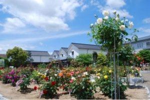 大阪gardenのサプライズプロポーズ 綾部バラ園