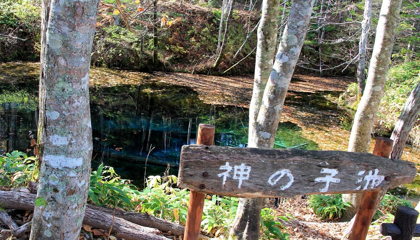 大阪のサプライズプロポーズ 神の子池