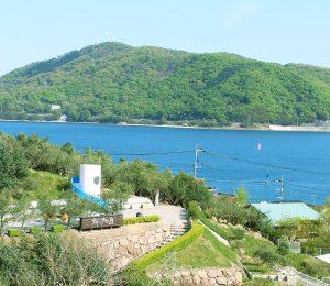 大阪gardenのサプライズプロポーズ 小豆島オリーブ園