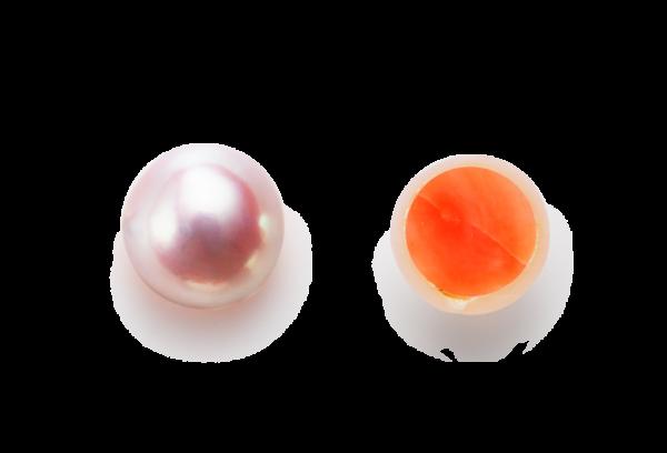 岸和田市・和泉市・堺市高品質真珠