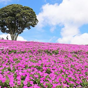 大阪gardenのサプライズプロポーズ マザー牧場
