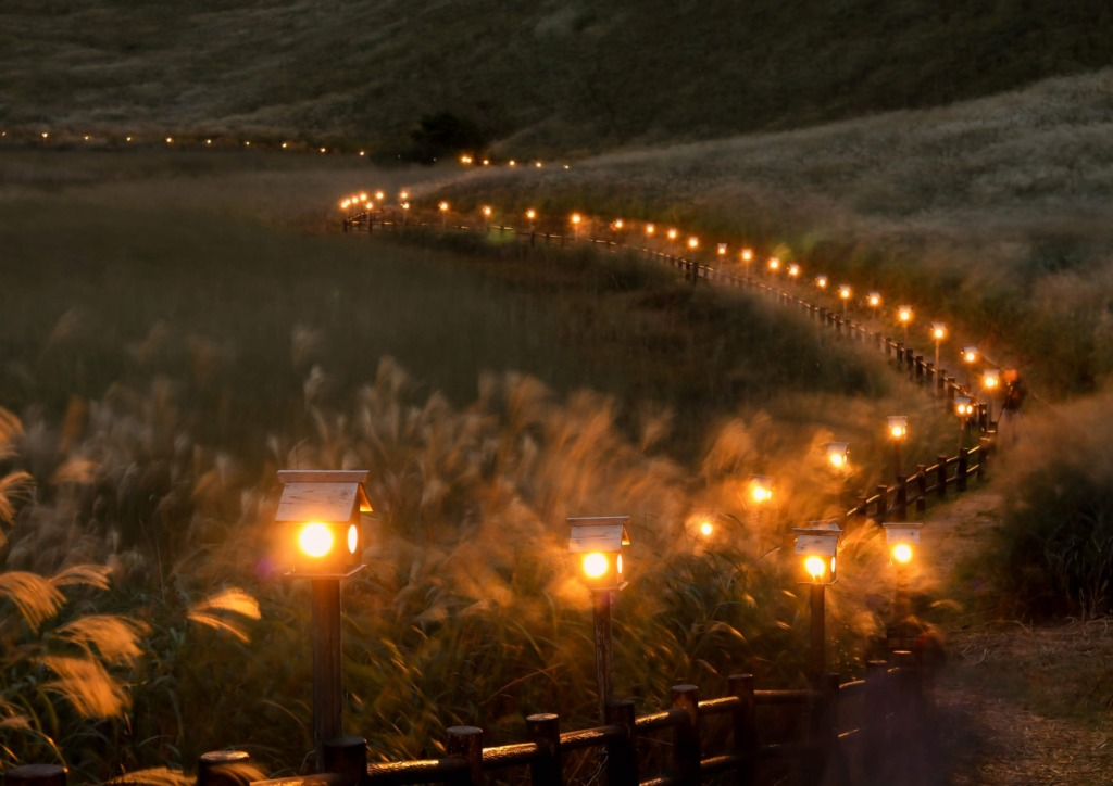 奈良県でプロポーズ草原人気