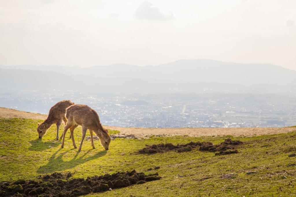 奈良県でプロポーズ若草山