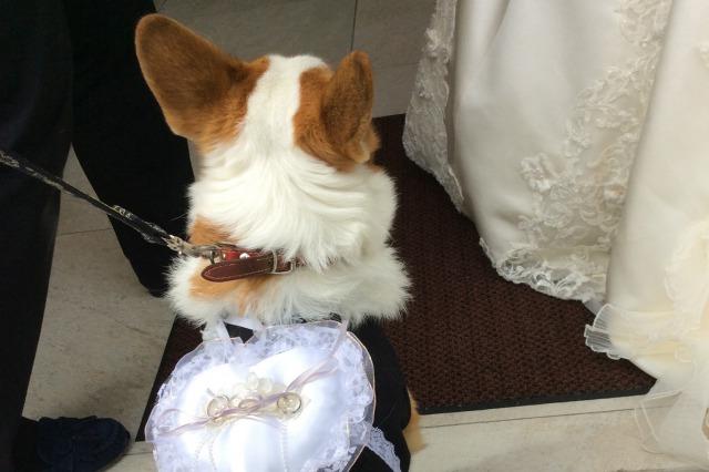 奈良県の結婚式場あしびの郷リングドック